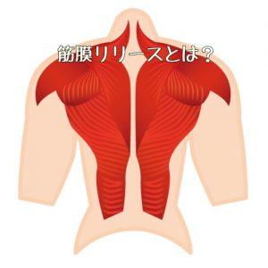 筋膜 背中 筋肉 筋膜リリース